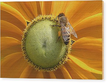 Pollen Time Wood Print by Brian Chase
