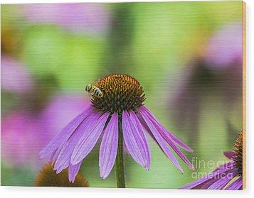 Pollen Tracks... Wood Print by Dan Hefle