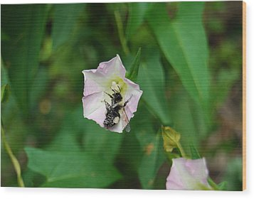 Wood Print featuring the photograph Pollenating Bee by Ramona Whiteaker