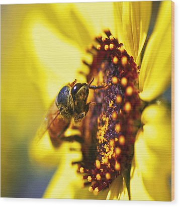 Pollinating Wood Print by Gilbert Artiaga