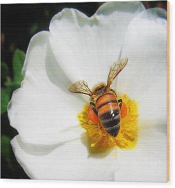Pollinating Wood Print