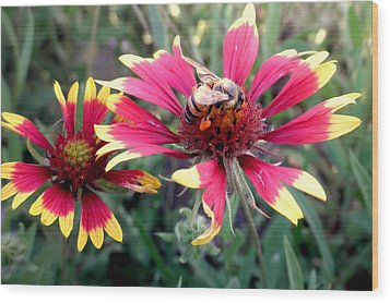 Pollination #1 Wood Print by Camille Reichardt