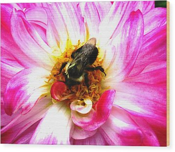 Pollination Nation 2 Wood Print by Will Boutin Photos