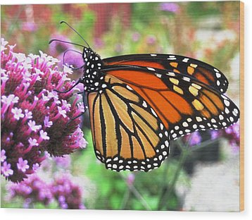 Pollination Nation 3 Wood Print by Will Boutin Photos