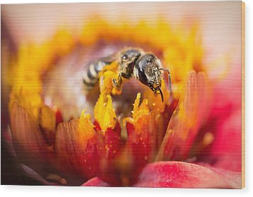 Pollination Wood Print by Priya Ghose