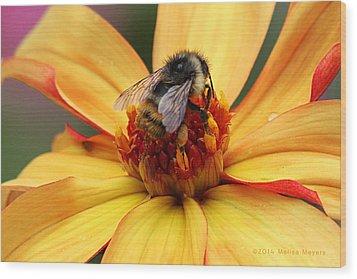 Pollinator  Wood Print by Melisa Meyers