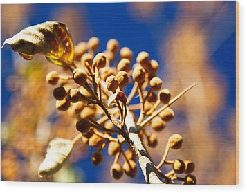 Pollyana Seed Pods Wood Print by Christopher McPhail