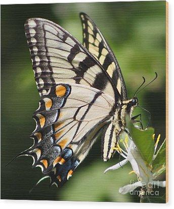 Polychromatic Beauty Wood Print by Anita Oakley