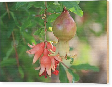 Pomegranate Wood Print