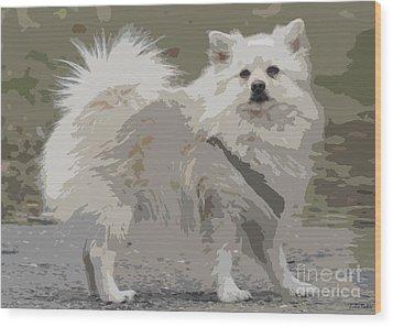 Pomeranian Dog Wood Print by Jivko Nakev