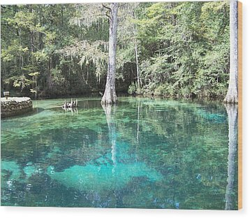 Ponce De Leon Springs Wood Print by Michele Kaiser