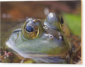 Pond Celebrity Wood Print by Juergen Roth