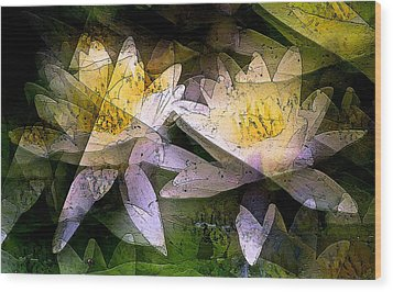Pond Lily 24 Wood Print by Pamela Cooper
