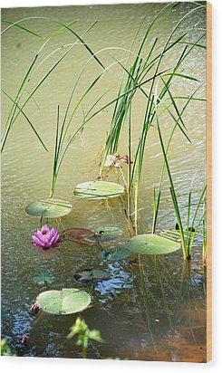 Pond  Reflections Wood Print by Elmer Baez