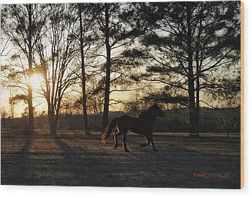 Pony's Evening Pasture Trot Wood Print by Paulette B Wright