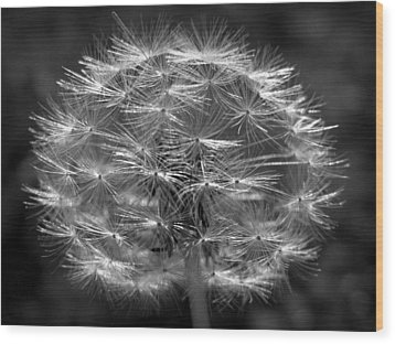 Wood Print featuring the photograph Poof - Black And White by Joseph Skompski