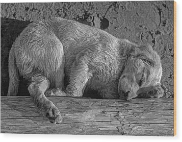 Pooped Puppy Bw Wood Print by Steve Harrington