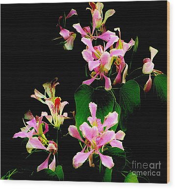 Poor Mans Orchid Wood Print by Amar Sheow