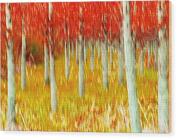 Poplars Wood Print by Michele Wright
