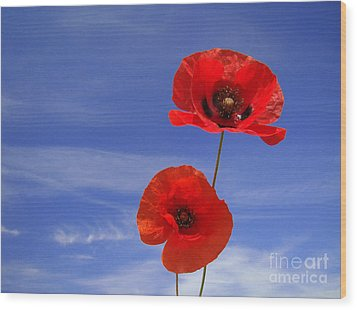 Poppies 02 Wood Print by Giorgio Darrigo