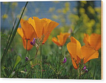 Wood Print featuring the photograph Poppies 2 by Ken Dietz