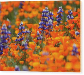 Poppies And Lupine Wood Print by Bill Keiran