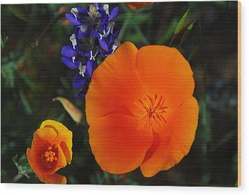 Poppies And Lupine Wood Print by Lynn Bauer