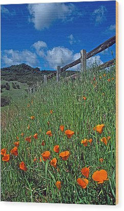 Poppies And The Fence Wood Print by Kathy Yates