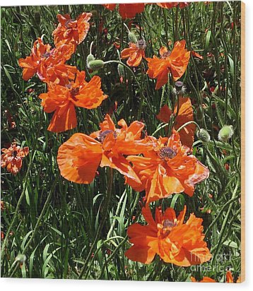 Poppies Ballet Wood Print by Claudette Bujold-Poirier