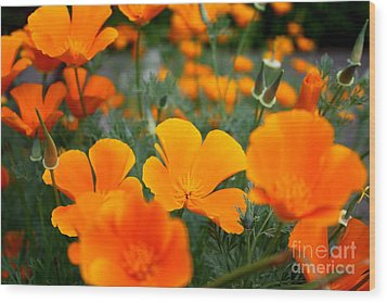 Wood Print featuring the photograph Poppies by Edward R Wisell