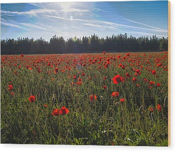 Poppies Field Forever Wood Print by Meir Ezrachi