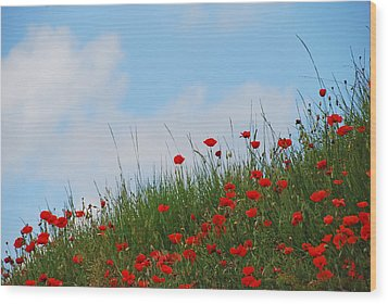 Poppies In A French Landscape Wood Print