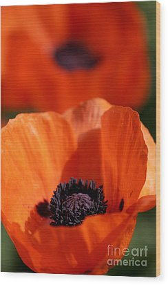 Wood Print featuring the photograph Poppies In Sunlight by Lincoln Rogers