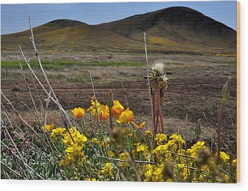 Poppies In The Field Chiracahua Mountains Wood Print by Diane Lent
