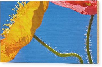 Poppies In The Sky Wood Print by Joan Herwig