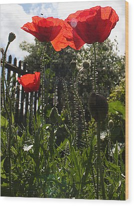 Poppies In The Sun Wood Print by Stephen Norris