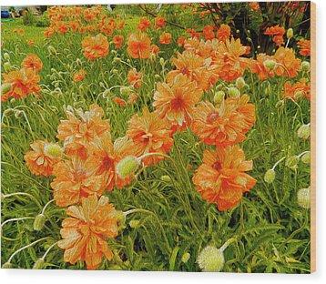 Poppies Jamestown Oil 2 Wood Print by Dee Meyer