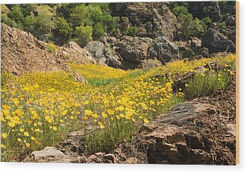 Poppies On The Stanislaus River Wood Print by Matt Tilghman