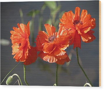 Poppies Wood Print by Rebecca Overton