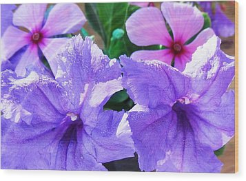 Popping Purple Petals Beauty Wood Print