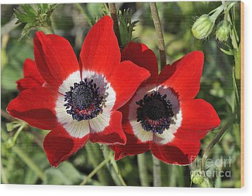 Wood Print featuring the photograph Poppy Anemones by George Atsametakis