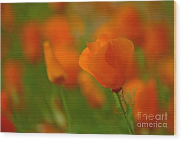 Wood Print featuring the photograph Poppy Art by Nick  Boren