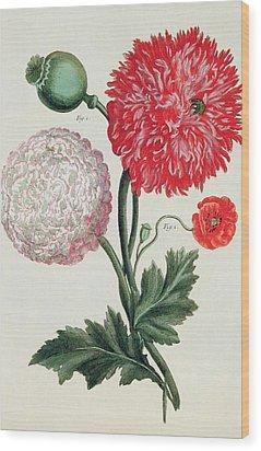 Poppy Wood Print by Basilius Besler