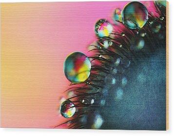 Poppy Drops II Wood Print by Sharon Johnstone