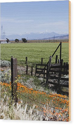 Wood Print featuring the photograph Poppy Fences by Ivete Basso Photography