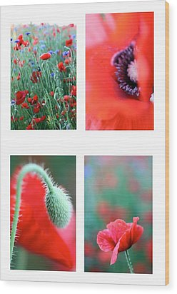 Poppy Field 1 Wood Print by AR Annahita