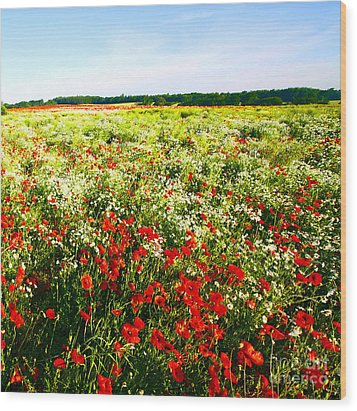 Poppy Field In Summer Wood Print