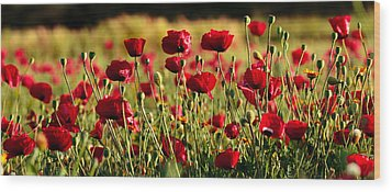 Wood Print featuring the photograph Poppy Fields Forever by Uri Baruch