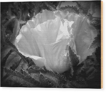 Poppy Flower 2 Wood Print by Heather L Wright