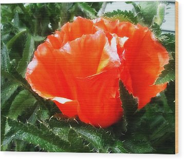 Poppy Flower Wood Print by Heather L Wright